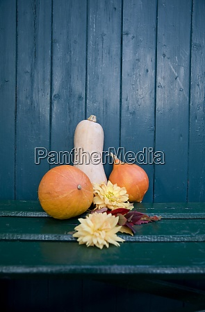 autumnal decoration dahlia and ornamental pumpkins
