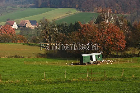 germany baden wuerttemberg alternative poultry farming