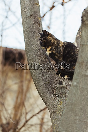 tabby cat sits on tree trunk