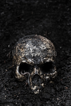 skull in wet soil with earthworm