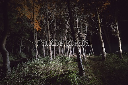 forest at night illuminated with a