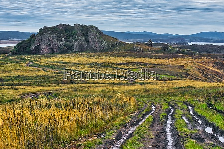 scenic view of grassy landscape against