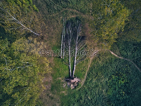 aerial view of fallen damaged trees