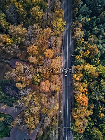 road covered with trees