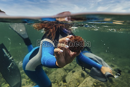 woman showing sea urchin while diving