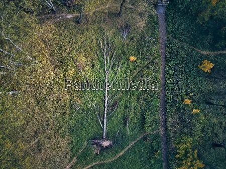drone view of fallen tree in