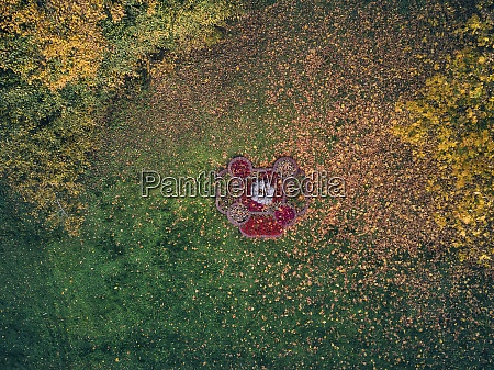 scattered fallen leaves on grass at