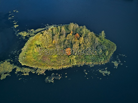 aerial view of autumn trees on