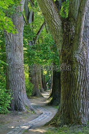 paved footpath winding between trees in