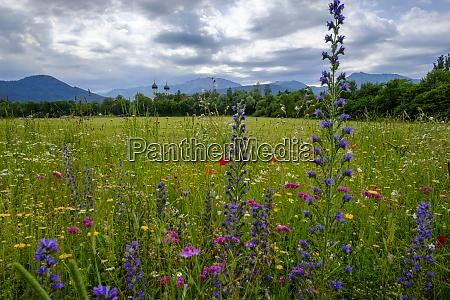 colorful wildflowers blooming in springtime meadow