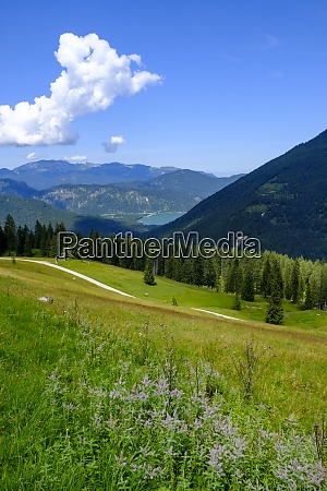 scenic view of summer meadow in