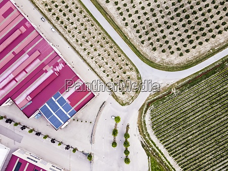 drone view of green plantation