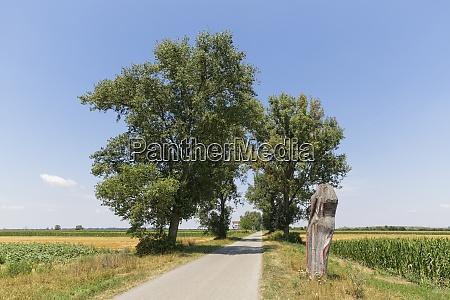 austria, , burgenland, , andau, , rural, road - 29121033