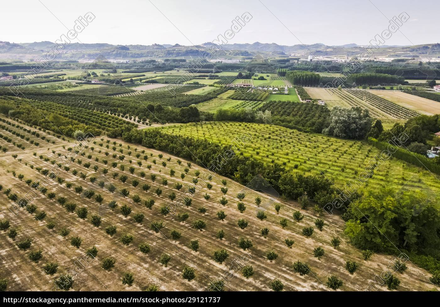 drone, view, of, field, crops, growing - 29121737
