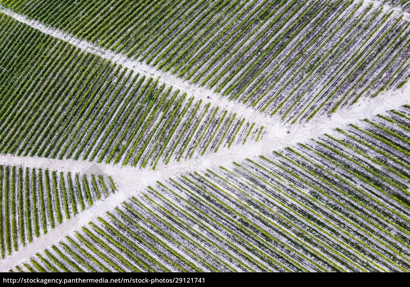 drone, view, of, footpaths, cutting, through - 29121741