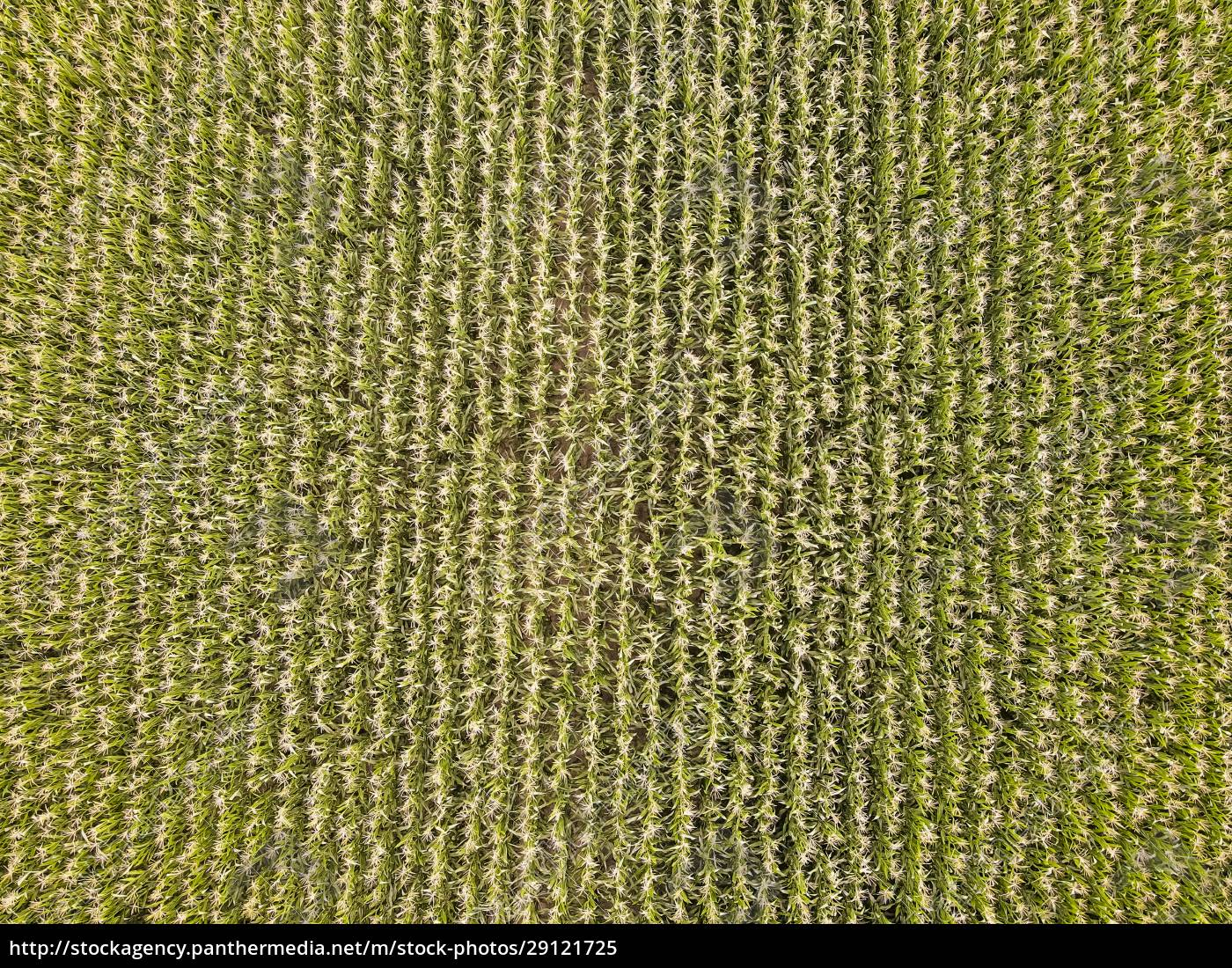 drone, view, of, green, crops, growing - 29121725