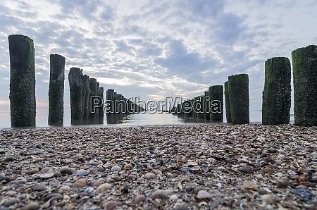 netherlands domburg breakwaters beach with shells