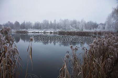 winter frosty landscape