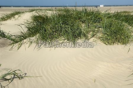 sandstruktur strandhafer ammophila