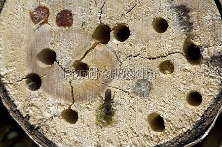 insektenunterschlupf wildbiene