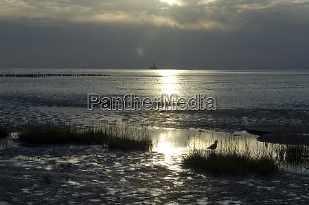 wattenmeer nordseekueste landschaft friedrichskoog