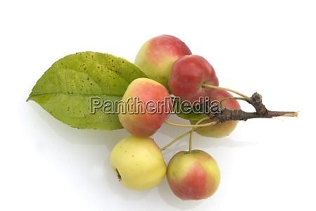 zieraepfel