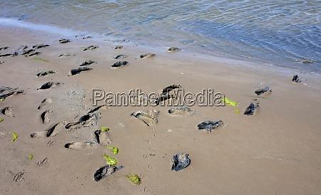 mudflat hike footprints at north sea