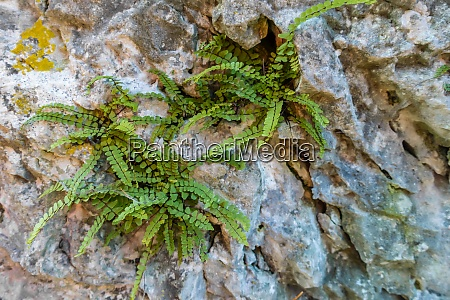 green plants between rocks while hiking