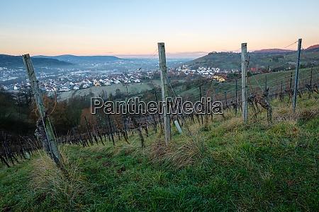 vineyard in winter dawn