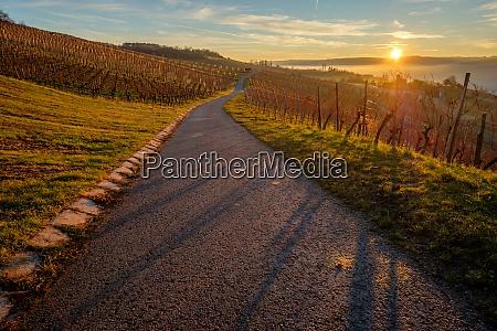 sunrise in german winter vineyard