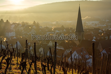vineyard and village with church in