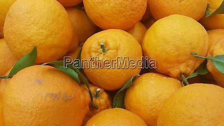 healthy fresh organic oranges background for