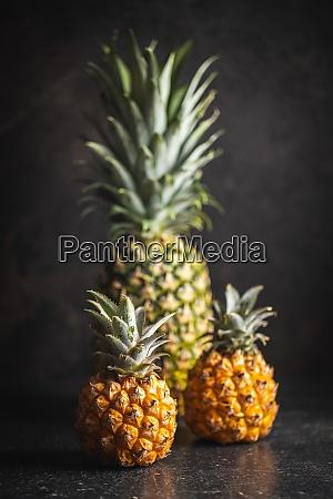ripe baby pineapple mini pineapple