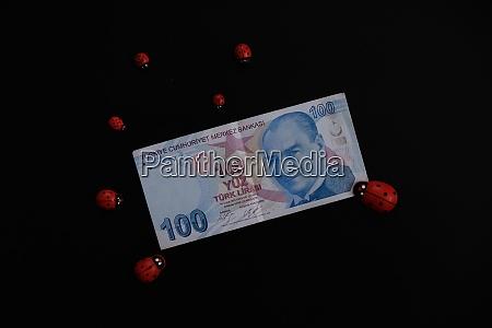 100 turkish lira banknote and ladybird