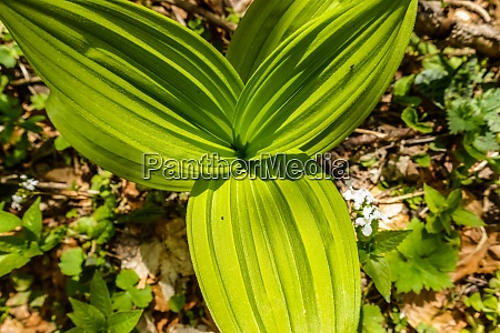 plant with green leaves in the