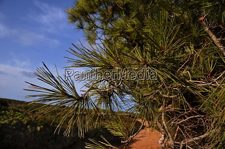 landscape on menorca