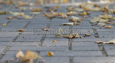 autumn leaves fell on the road