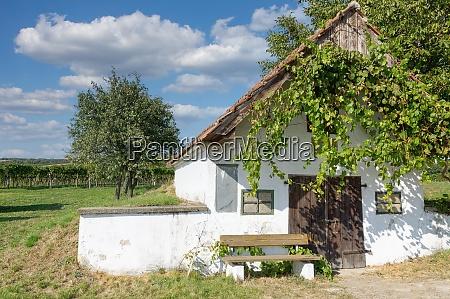 vineyard landscape at neusiedler see burgenland