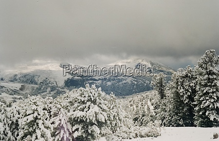 winter altai mountains and forests in