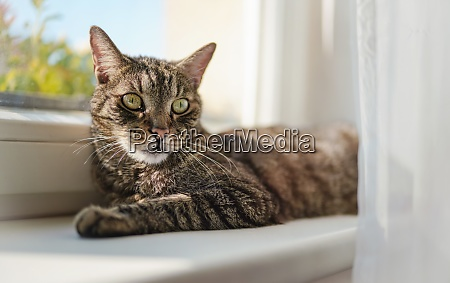 gray brown tabby cat relaxing on