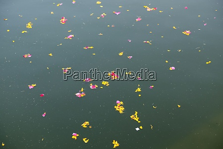 colorful floral offerings petals flowers and