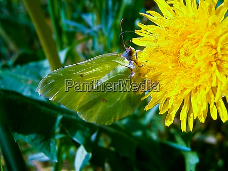 a butterfly on a flower of