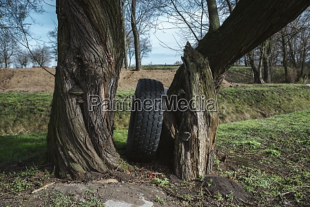 old tire left in the forest