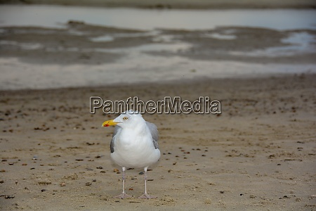 gull stands on sandy beach