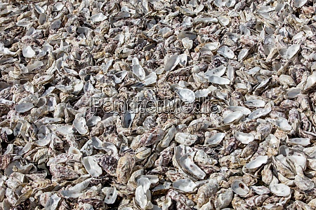 thousands of empty shells of