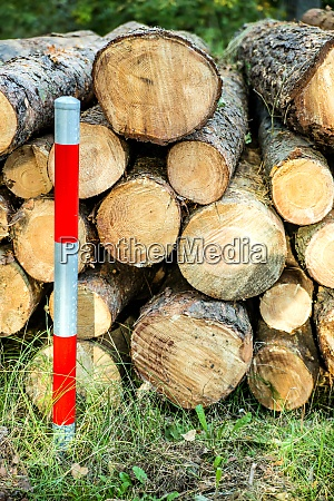 timber wood serrated in a forest