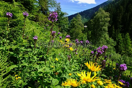 colorful flowers in the nature while