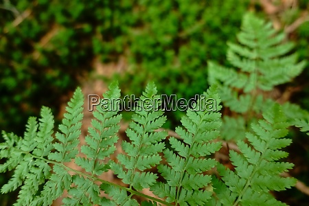 green fern in the forest close