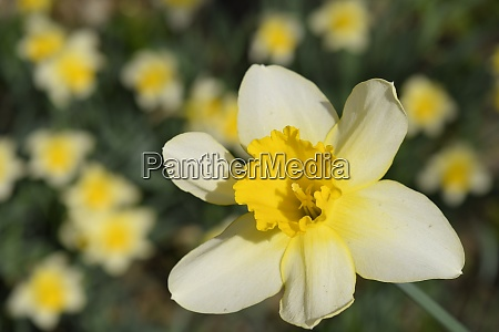 spring flowering bulb plants in the