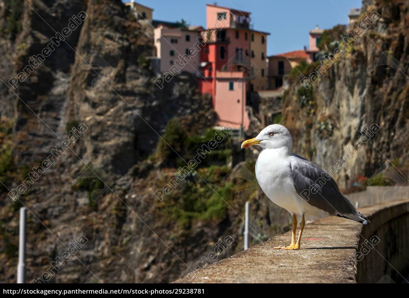 seagull, in, riomaggiore, - 29238781